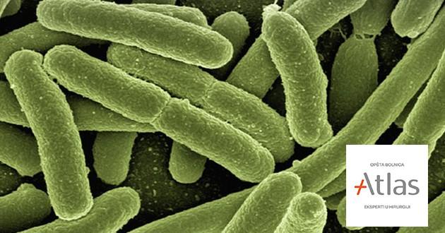 Ešerihija Koli Bakterija