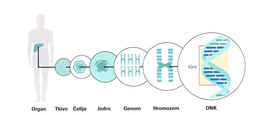 Šta je genom