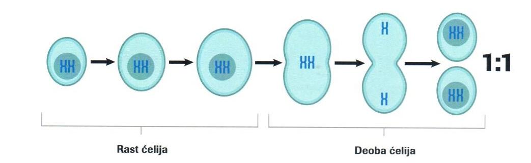 Deoba ćelija